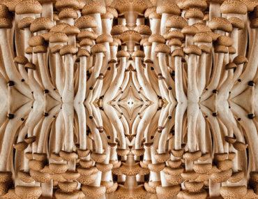 sacred mushrooms